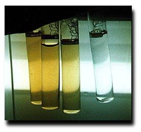 Ammonia in aquariums and ponds