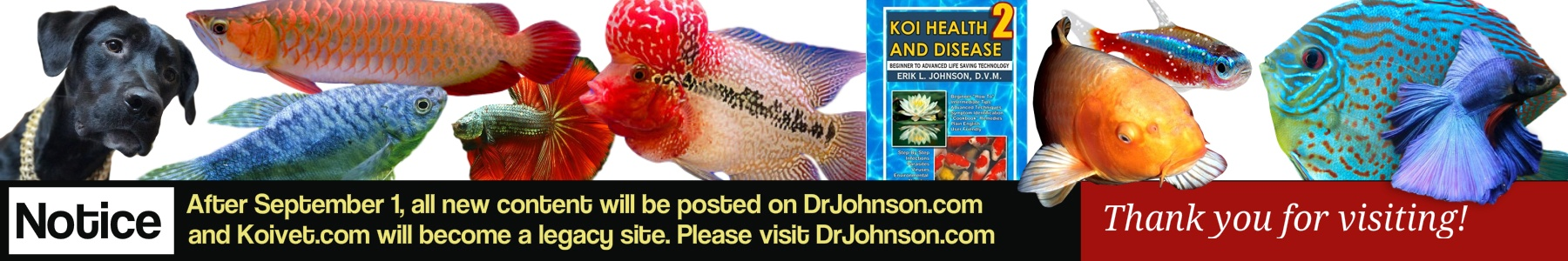 Koivet.com | Fish Health | Dr. Erik Johnson