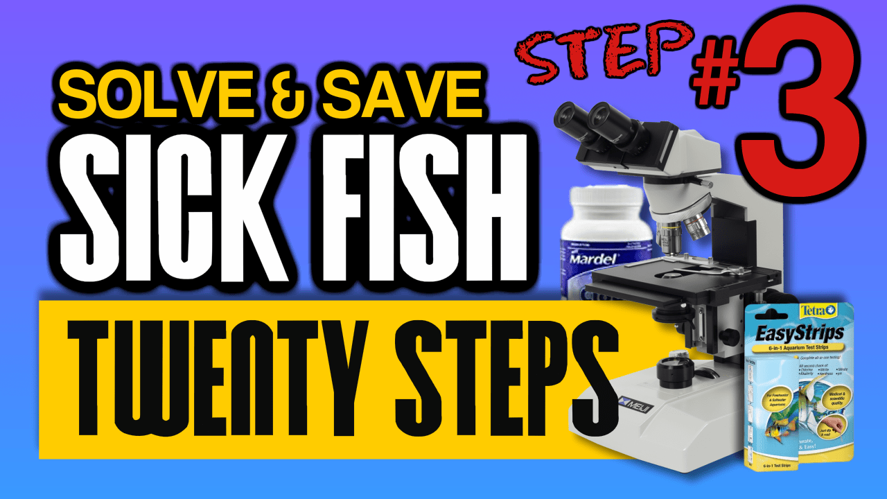 Twenty Steps to Diagnosis and Treat A Fish Health Outbreak