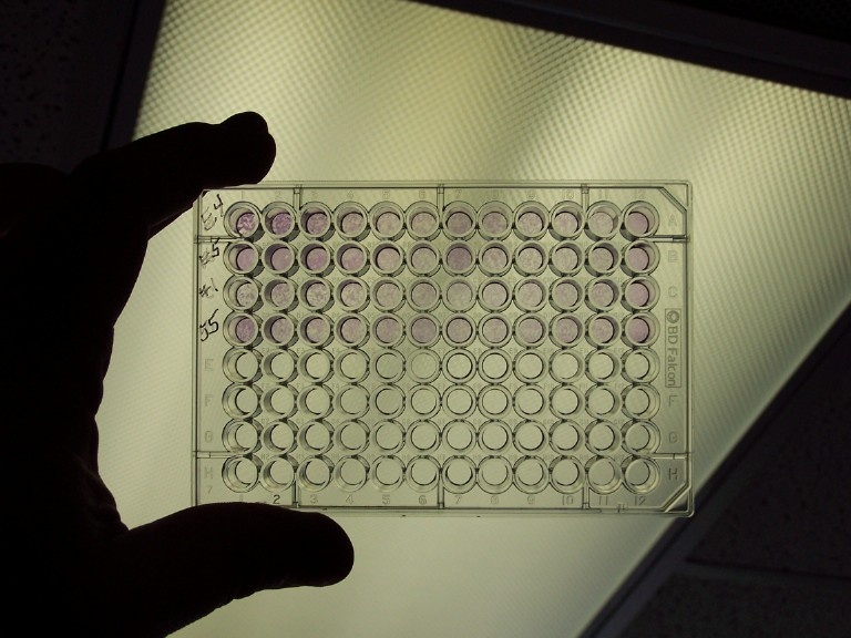 PCR assays for KHV can detect the virus with some accuracy