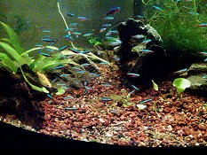 How To Set Up a Beginner Community Tank Aquarium